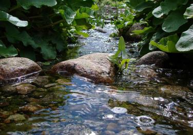 Trädgård trädgård damm : TrädgÃ¥rdsdammar | Damm i trädgÃ¥rden | Dammtrivsel