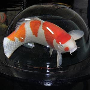 fish_globe2